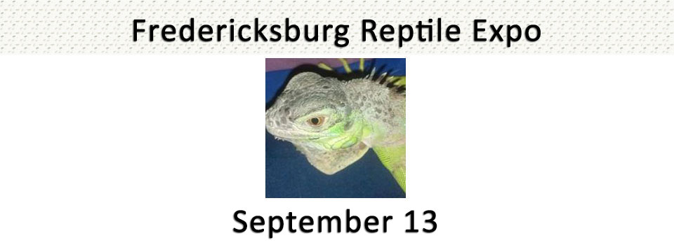 slide-reptile-expo2