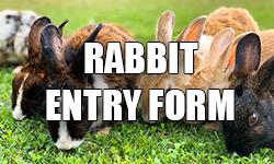 rabbit-button